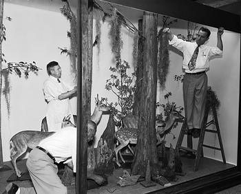 Preparing Deer Group in Natural History