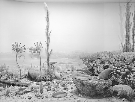 Silurian Marine Life Diorama, 1961, Smithsonian Institution Archives, SIA Acc. 16-126 [MNH-659].