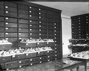 Department of Physical Anthropology Storage, 1911
