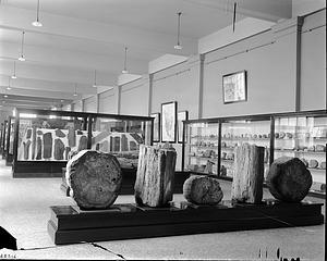 Paleontology Exhibit, Petrified Wood