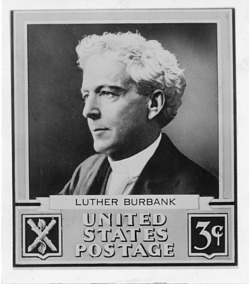 Luther Burbank (1849-1926), Smithsonian Institution Archives, SIA Acc. 90-105 [SIA2008-0067].