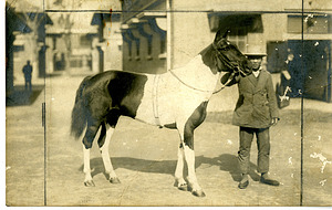 China Ponies, Unknown, Smithsonian Institution Archives, SIA RU007263 [SIA2008-2873].