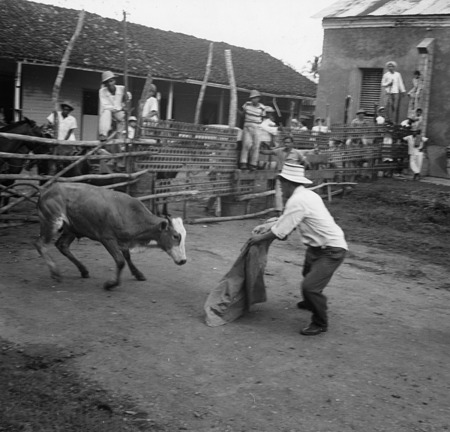 A man fighting a bull in Soná, Veraguas, Panama, 1953