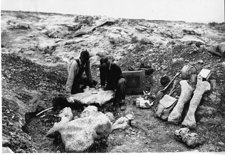 Expedition Members Lifting Titanotherium Specimen
