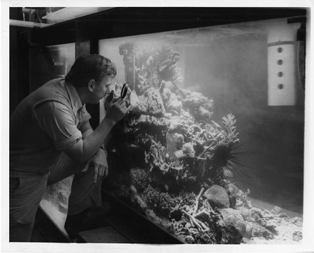 Scientist Walter H. Adey Inspects a Created Coral Reef at MNH