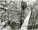 Alexander Wetmore Canopy Bridge, Panama