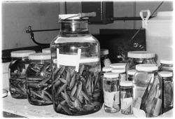 Marine Specimens in Jars
