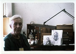 Doris Holmes Blake at Desk, by Unknown, c. 1970, Smithsonian Archives - History Div, SIA2010-1589.