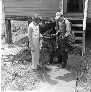 Guedén and Bea Wetmore Examining Pair of Black Hawks
