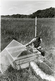 Biologist Bert Drake Checking a Greenhouse