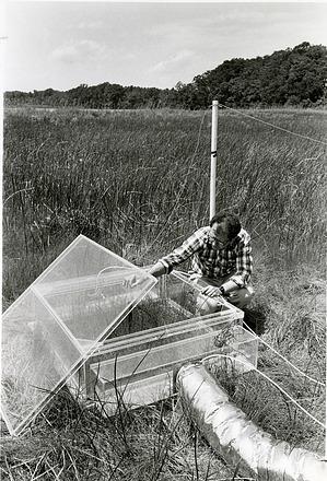 Biologist Bert Drake Checking a Greenhouse