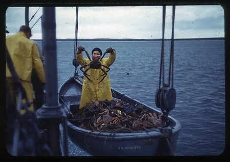 Example of catch from gill netting hoisted on the vessel Tondeleyo, September, 19, 1940, during Alas