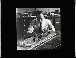 Preparator Norman Boss Mounting Skeleton of Extinct Lizard