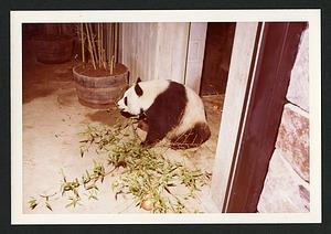Panda Function, 1972, Smithsonian Institution Archives, SIA RU000365 [SIA2012-6129].