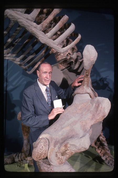 C. Lewis Gazin with Eremotherium, a giant ground sloth
