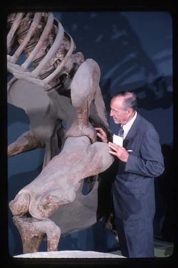 C. Lewis Gazin with Eremotherium, a giant ground sloth
