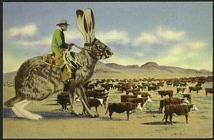 Postcard of a Jackrabbit Herding Cattle