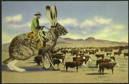 Postcard of a Jackrabbit Herding Cattle