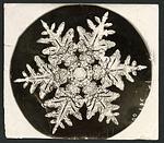 Wilson Bentley Photomicrograph of Stellar Snowflake No. 990