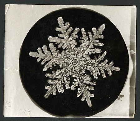 Wilson Bentley Photomicrograph of Stellar Snowflake No. 1152