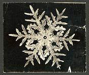 Wilson Bentley Photomicrograph of Stellar Snowflake No. 332