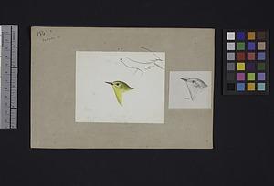 Robert Ridgway Bird Head Drawing #184