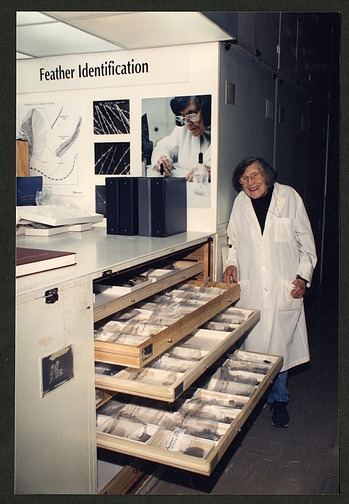 Roxie Laybourne Beside Three Open Drawers of Bird strike Remains