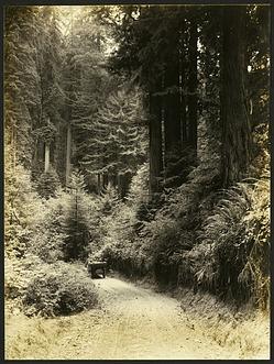 State Highway in Bolling Memorial Redwood Grove, Humboldt County, California