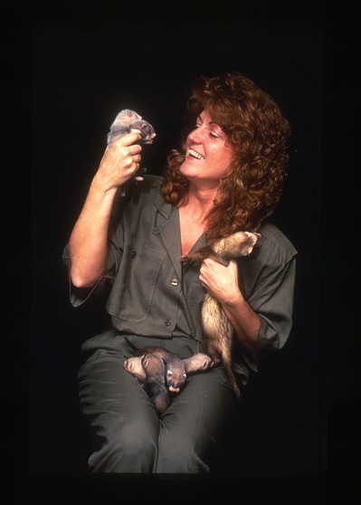 Dr. JoGayle Howard holds black-footed ferrets conceived through artificial insemination