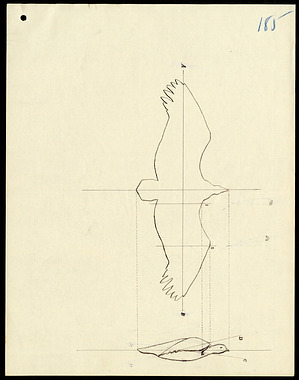 Sketch of bird when its wings are extended in the attitude of flight