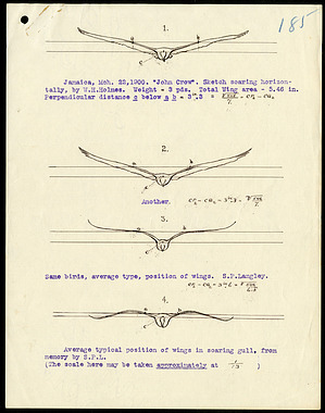 Sketch of birds soaring horizontally