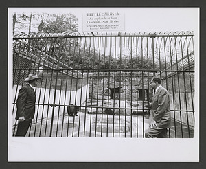 Little Smokey and two unidentified men in front of his enclosure at the NZP