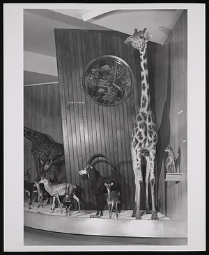 World of Mammals Exhibition Hall, Museum of Natural History