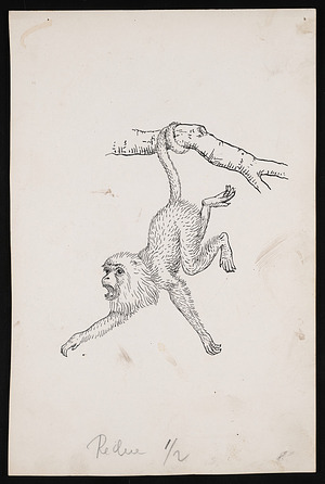 National Zoological Park, Monkey, Sketch