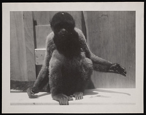 National Zoological Park, Woolly Monkey